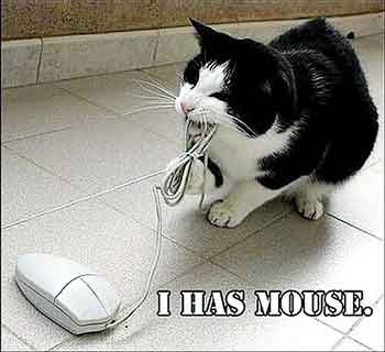 i has a mouse