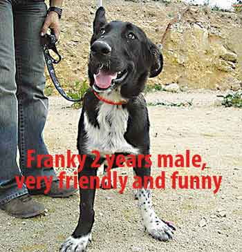 Franky-2-years-male