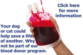DOG BLOOD DONOR