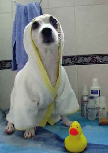 BATHROBE DOG