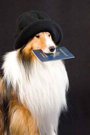 dog with passport