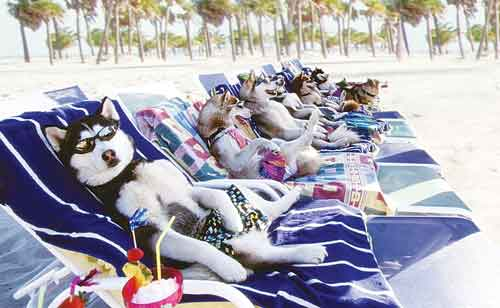 sunbathing dogs