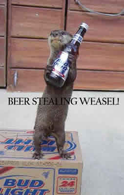 BEER STEALING WEASEL